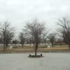 パナソニックさくら広場(門真)−桜と建築のコラボレーション
